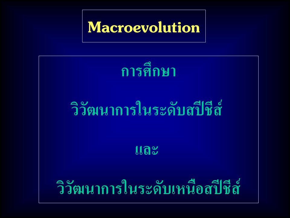 Macroevolution การศึกษา วิวัฒนาการในระดับสปีชีส์ และ วิวัฒนาการในระดับเหนือสปีชีส์