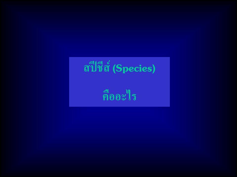 สปีชีส์ (Species) คืออะไร