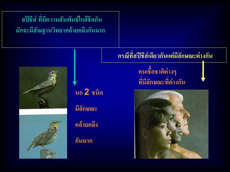 คนเชื้อชาติต่างๆ ที่มีลักษณะที่ต่างกัน นก 2 ชนิด มีลักษณะ คล้ายคลึง กันมาก สปีชีส์ ที่มีความสัมพันธ์ใกล้ชิดกัน มักจะมีสัณฐานวิทยาคล้ายคลึงกันมาก