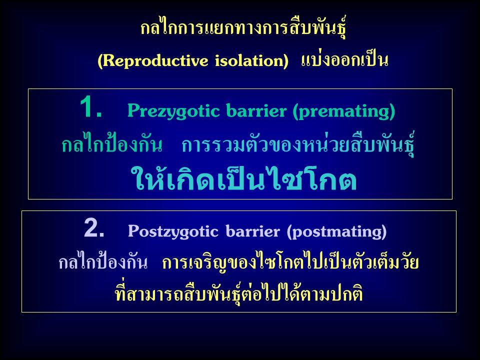 กลไกการแยกทางการสืบพันธุ์ (Reproductive isolation) แบ่งออกเป็น 1. Prezygotic barrier (premating) กลไกป้องกัน การรวมตัวของหน่วยสืบพันธุ์ ให้เกิดเป็นไซโ