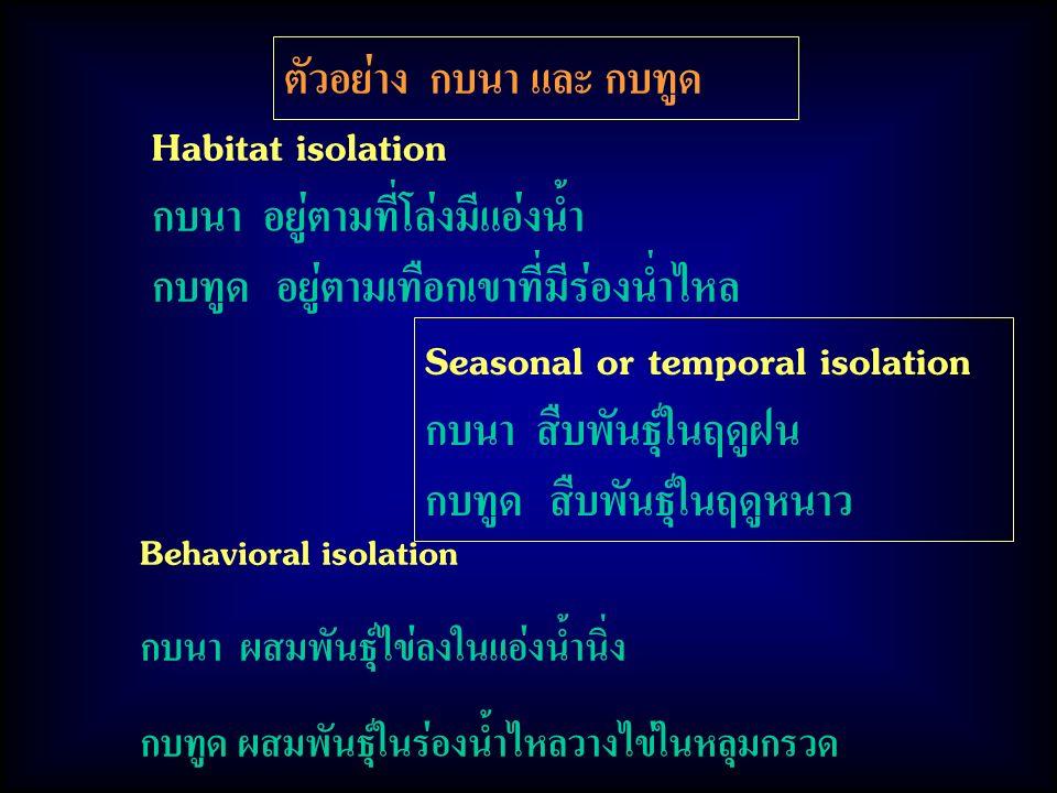 Habitat isolation กบนา อยู่ตามที่โล่งมีแอ่งน้ำ กบทูด อยู่ตามเทือกเขาที่มีร่องน่ำไหล ตัวอย่าง กบนา และ กบทูด Seasonal or temporal isolation กบนา สืบพันธุ์ในฤดูฝน กบทูด สืบพันธุ์ในฤดูหนาว Behavioral isolation กบนา ผสมพันธุ์ไข่ลงในแอ่งน้ำนิ่ง กบทูด ผสมพันธุ์ในร่องน้ำไหลวางไข่ในหลุมกรวด