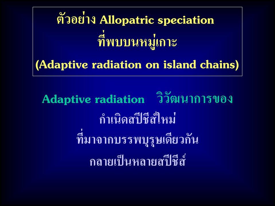 ตัวอย่าง Allopatric speciation ที่พบบนหมู่เกาะ (Adaptive radiation on island chains) Adaptive radiation วิวัฒนาการของ กำเนิดสปีชีส์ใหม่ ที่มาจากบรรพบุรุษเดียวกัน กลายเป็นหลายสปีชีส์