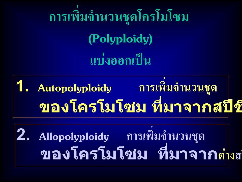 การเพิ่มจำนวนชุดโครโมโซม (Polyploidy) แบ่งออกเป็น 1. Autopolyploidy การเพิ่มจำนวนชุด ของโครโมโซม ที่มาจากสปีชีส์เดียวกัน 2. Allopolyploidy การเพิ่มจำน