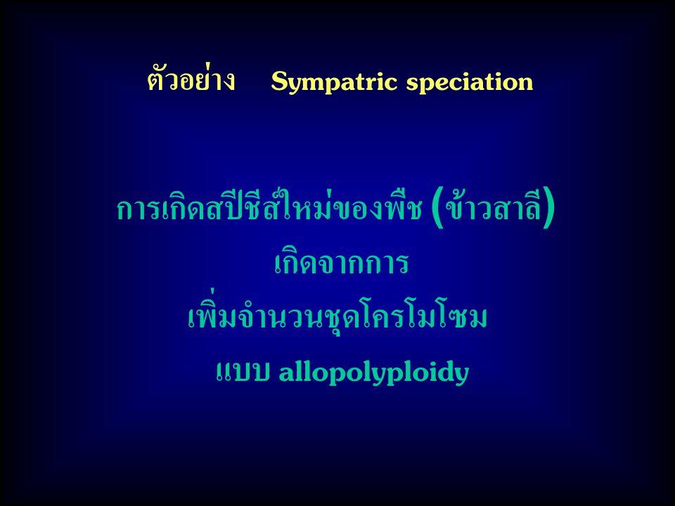 ตัวอย่าง Sympatric speciation การเกิดสปีชีส์ใหม่ของพืช (ข้าวสาลี) เกิดจากการ เพิ่มจำนวนชุดโครโมโซม แบบ allopolyploidy