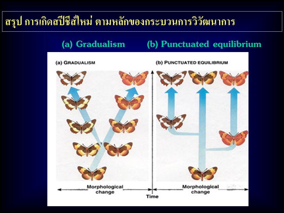 (a) Gradualism (b) Punctuated equilibrium สรุป การเกิดสปีชีส์ใหม่ ตามหลักของกระบวนการวิวัฒนาการ