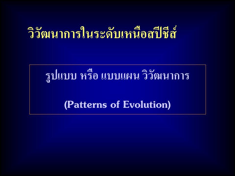 วิวัฒนาการในระดับเหนือสปีชีส์ รูปแบบ หรือ แบบแผน วิวัฒนาการ (Patterns of Evolution)