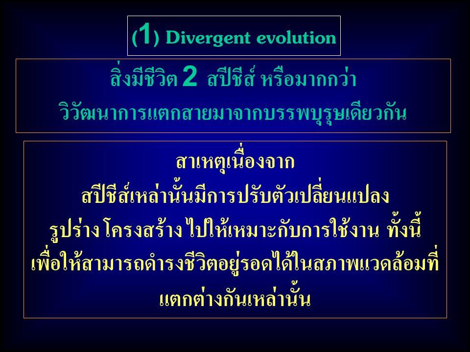 สาเหตุเนื่องจาก สปีชีส์เหล่านั้นมีการปรับตัวเปลี่ยนแปลง รูปร่าง โครงสร้าง ไปให้เหมาะกับการใช้งาน ทั้งนี้ เพื่อให้สามารถดำรงชีวิตอยู่รอดได้ในสภาพแวดล้อมที่ แตกต่างกันเหล่านั้น (1) Divergent evolution สิ่งมีชีวิต 2 สปีชีส์ หรือมากกว่า วิวัฒนาการแตกสายมาจากบรรพบุรุษเดียวกัน
