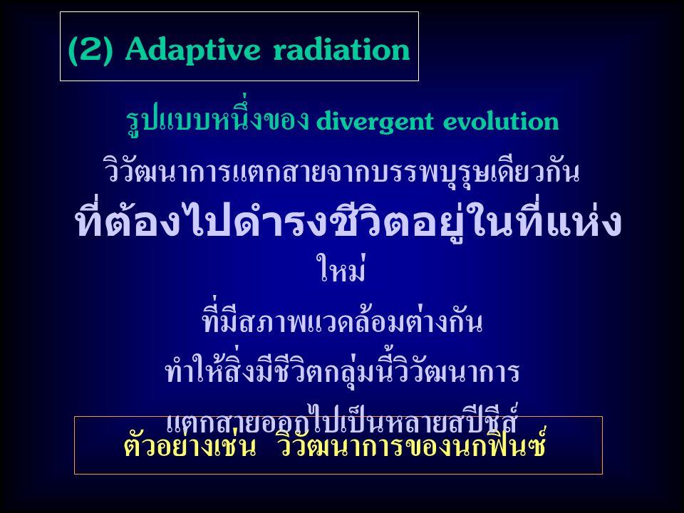 (2) Adaptive radiation ตัวอย่างเช่น วิวัฒนาการของนกฟินซ์ รูปแบบหนึ่งของ divergent evolution วิวัฒนาการแตกสายจากบรรพบุรุษเดียวกัน ที่ต้องไปดำรงชีวิตอยู่ในที่แห่ง ใหม่ ที่มีสภาพแวดล้อมต่างกัน ทำให้สิ่งมีชีวิตกลุ่มนี้วิวัฒนาการ แตกสายออกไปเป็นหลายสปีชีส์