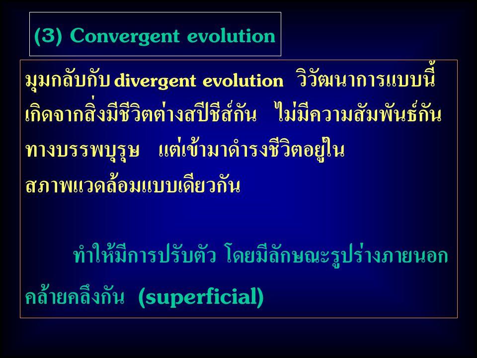(3) Convergent evolution มุมกลับกับ divergent evolution วิวัฒนาการแบบนี้ เกิดจากสิ่งมีชีวิตต่างสปีชีส์กัน ไม่มีความสัมพันธ์กัน ทางบรรพบุรุษ แต่เข้ามาดำรงชีวิตอยู่ใน สภาพแวดล้อมแบบเดียวกัน ทำให้มีการปรับตัว โดยมีลักษณะรูปร่างภายนอก คล้ายคลึงกัน (superficial)
