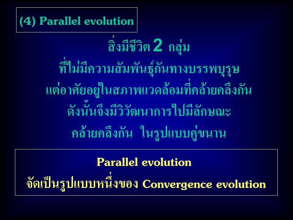 (4) Parallel evolution Parallel evolution จัดเป็นรูปแบบหนึ่งของ Convergence evolution สิ่งมีชีวิต 2 กลุ่ม ที่ไม่มีความสัมพันธุ์กันทางบรรพบุรุษ แต่อาศัยอยู่ในสภาพแวดล้อมที่คล้ายคลึงกัน ดังนั้นจึงมีวิวัฒนาการไปมีลักษณะ คล้ายคลึงกัน ในรูปแบบคู่ขนาน