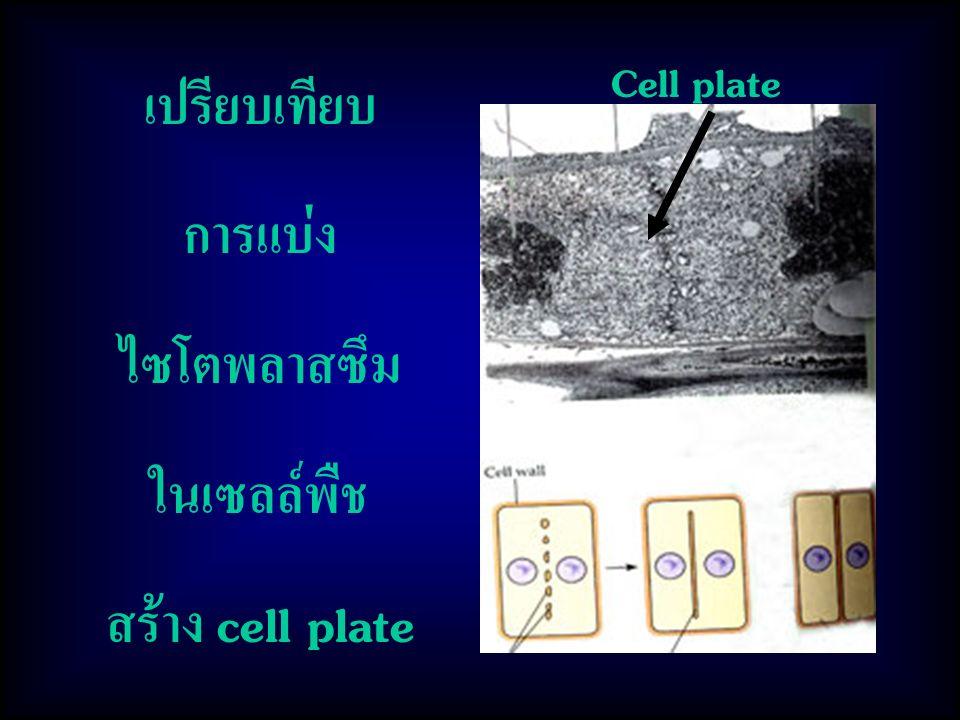 เปรียบเทียบ การแบ่ง ไซโตพลาสซึม ในเซลล์พืช สร้าง cell plate Cell plate