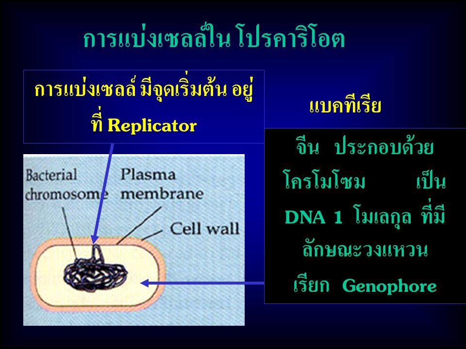 การแบ่งเซลล์ใน โปรคาริโอต แบคทีเรีย จีน ประกอบด้วย โครโมโซม เป็น DNA 1 โมเลกุล ที่มี ลักษณะวงแหวน เรียก Genophore การแบ่งเซลล์ มีจุดเริ่มต้น อยู่ ที่ Replicator
