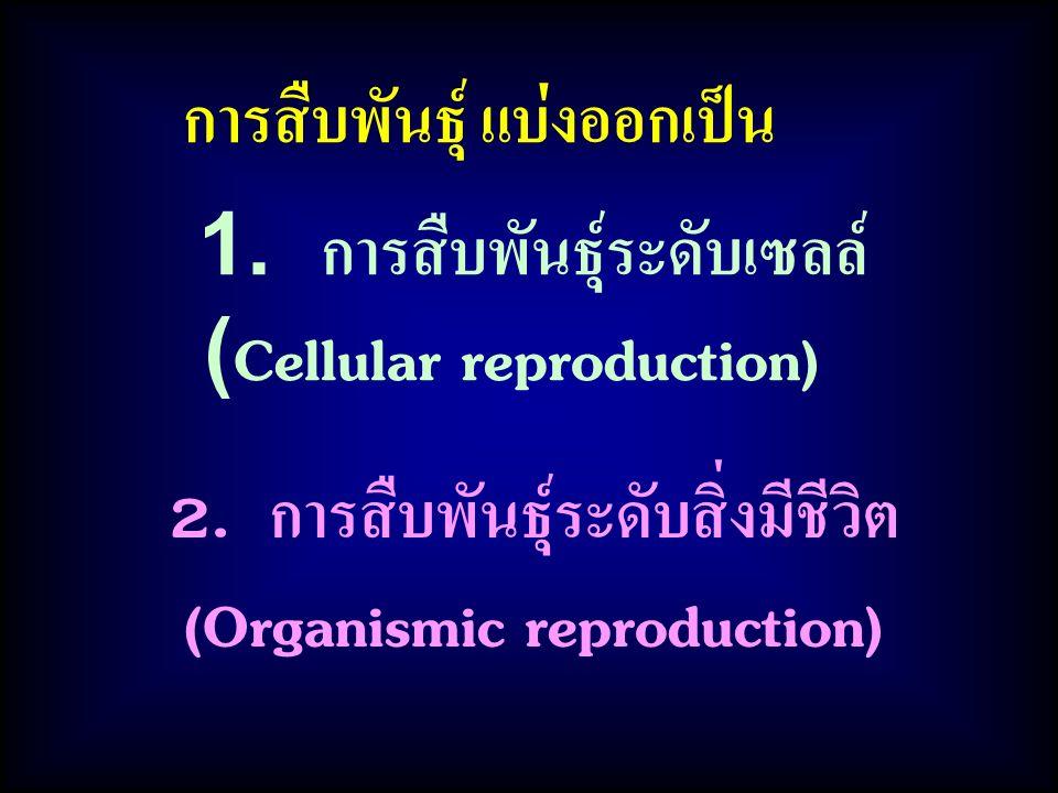 การสืบพันธุ์ แบ่งออกเป็น 1. การสืบพันธุ์ระดับเซลล์ (Cellular reproduction) 2. การสืบพันธุ์ระดับสิ่งมีชีวิต (Organismic reproduction)