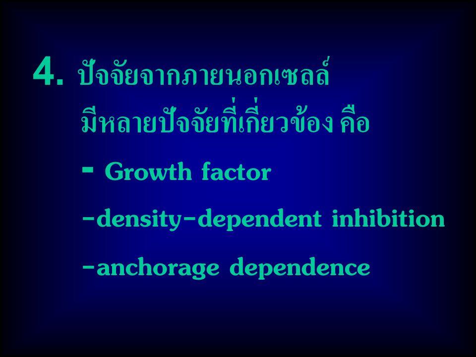 4. ปัจจัยจากภายนอกเซลล์ มีหลายปัจจัยที่เกี่ยวข้อง คือ - Growth factor -density-dependent inhibition -anchorage dependence