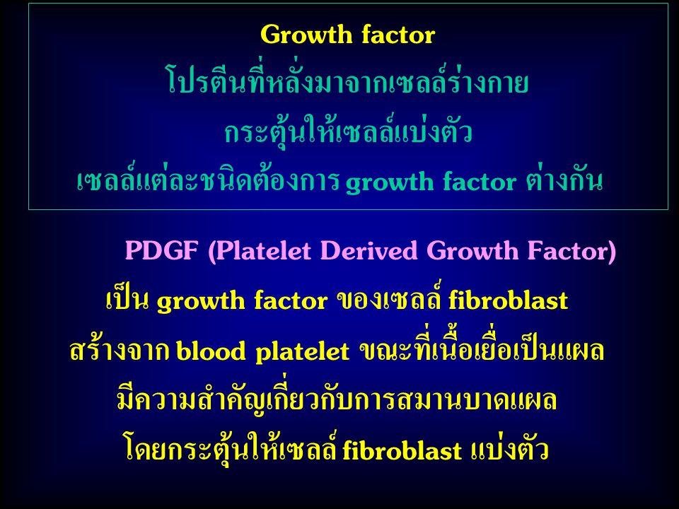 PDGF (Platelet Derived Growth Factor) เป็น growth factor ของเซลล์ fibroblast สร้างจาก blood platelet ขณะที่เนื้อเยื่อเป็นแผล มีความสำคัญเกี่ยวกับการสมานบาดแผล โดยกระตุ้นให้เซลล์ fibroblast แบ่งตัว Growth factor โปรตีนที่หลั่งมาจากเซลล์ร่างกาย กระตุ้นให้เซลล์แบ่งตัว เซลล์แต่ละชนิดต้องการ growth factor ต่างกัน
