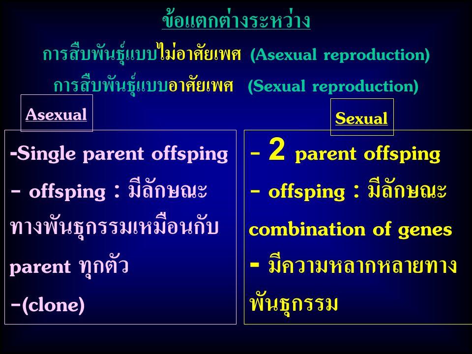ข้อแตกต่างระหว่าง การสืบพันธุ์แบบไม่อาศัยเพศ (Asexual reproduction) การสืบพันธุ์แบบอาศัยเพศ (Sexual reproduction) Asexual - Single parent offsping - offsping : มีลักษณะ ทางพันธุกรรมเหมือนกับ parent ทุกตัว -(clone) Sexual - 2 parent offsping - offsping : มีลักษณะ combination of genes - มีความหลากหลายทาง พันธุกรรม