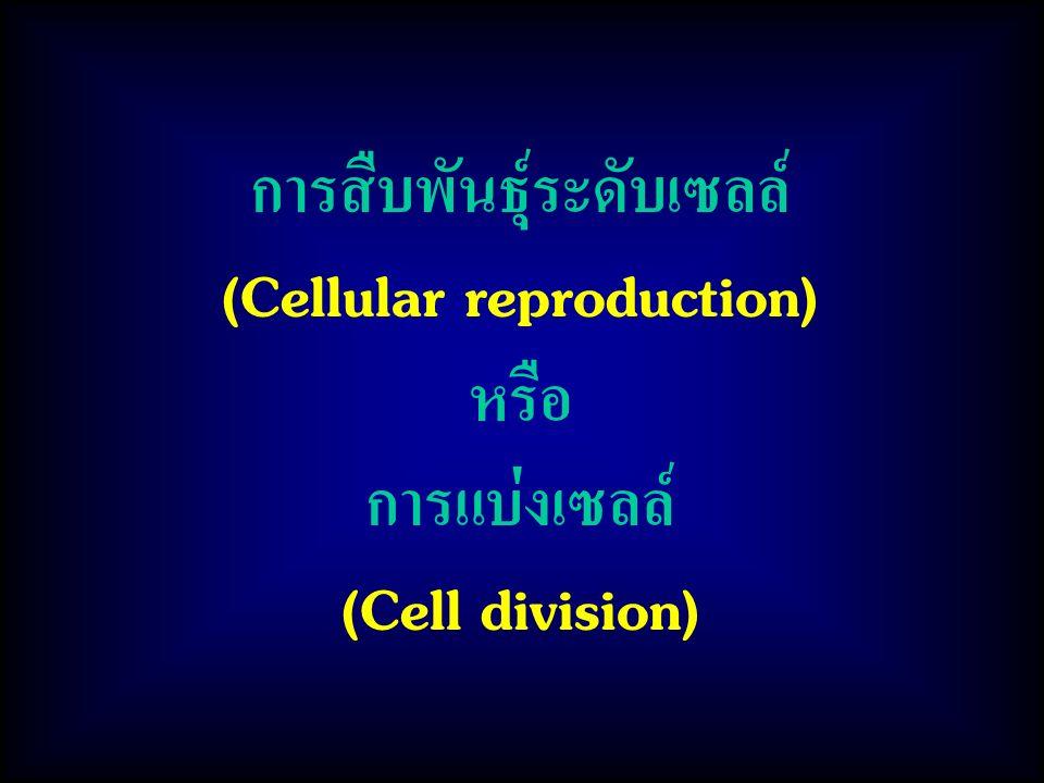 การสืบพันธุ์ระดับเซลล์ (Cellular reproduction) หรือ การแบ่งเซลล์ (Cell division)