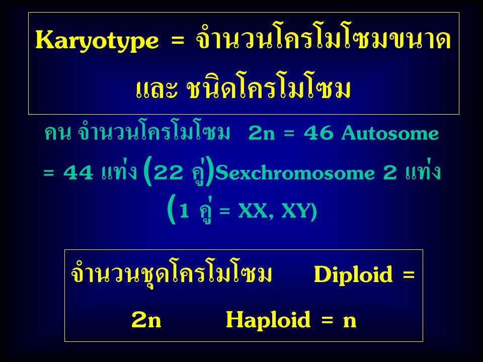Karyotype = จำนวนโครโมโซมขนาด และ ชนิดโครโมโซม คน จำนวนโครโมโซม 2n = 46 Autosome = 44 แท่ง (22 คู่)Sexchromosome 2 แท่ง (1 คู่ = XX, XY) จำนวนชุดโครโมโซม Diploid = 2n Haploid = n