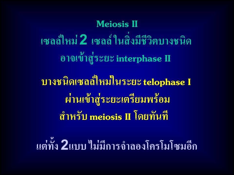 แต่ทั้ง 2แบบ ไม่มีการจำลองโครโมโซมอีก Meiosis II เซลล์ใหม่ 2 เซลล์ ในสิ่งมีชีวิตบางชนิด อาจเข้าสู่ระยะ interphase II บางชนิดเซลล์ใหม่ในระยะ telophase I ผ่านเข้าสู่ระยะเตรียมพร้อม สำหรับ meiosis II โดยทันที
