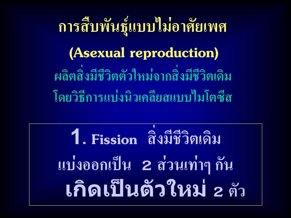 การสืบพันธุ์แบบไม่อาศัยเพศ (Asexual reproduction) ผลิตสิ่งมีชีวิตตัวใหม่จากสิ่งมีชีวิตเดิม โดยวิธีการแบ่งนิวเคลียสแบบไมโตซีส 1. Fission สิ่งมีชีวิตเดิ