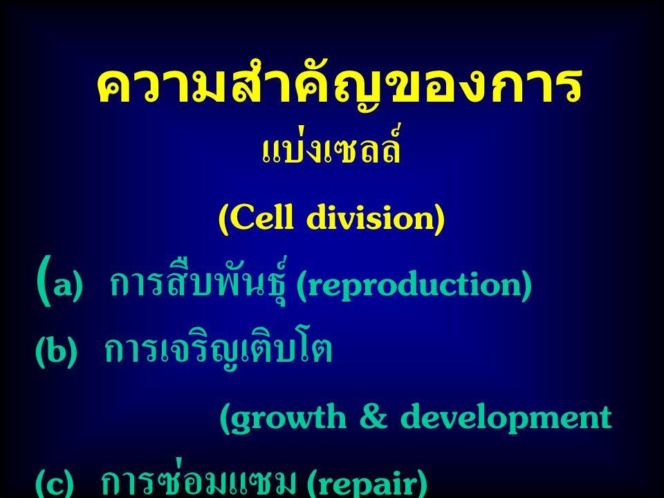 ความสำคัญของการ แบ่งเซลล์ (Cell division) (a) การสืบพันธุ์ (reproduction) (b) การเจริญเติบโต (growth & development (c) การซ่อมแซม (repair)