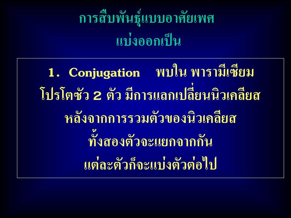 การสืบพันธุ์แบบอาศัยเพศ แบ่งออกเป็น 1. Conjugation พบใน พารามีเซียม โปรโตซัว 2 ตัว มีการแลกเปลี่ยนนิวเคลียส หลังจากการรวมตัวของนิวเคลียส ทั้งสองตัวจะแ