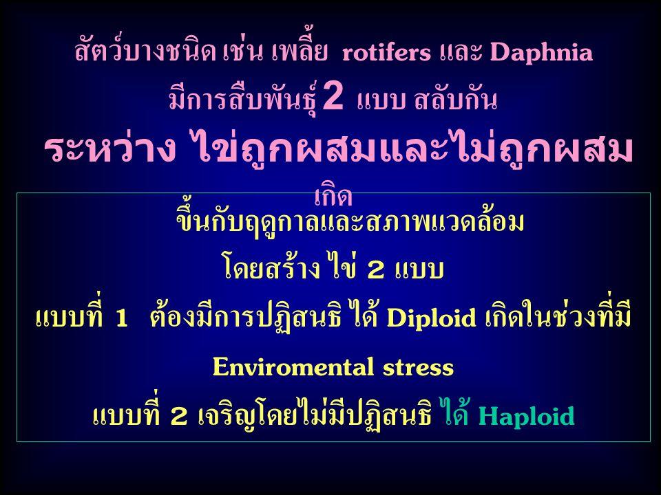 ขึ้นกับฤดูกาลและสภาพแวดล้อม โดยสร้าง ไข่ 2 แบบ แบบที่ 1 ต้องมีการปฏิสนธิ ได้ Diploid เกิดในช่วงที่มี Enviromental stress แบบที่ 2 เจริญโดยไม่มีปฏิสนธิ ได้ Haploid สัตว์บางชนิด เช่น เพลี้ย rotifers และ Daphnia มีการสืบพันธุ์ 2 แบบ สลับกัน ระหว่าง ไข่ถูกผสมและไม่ถูกผสม เกิด