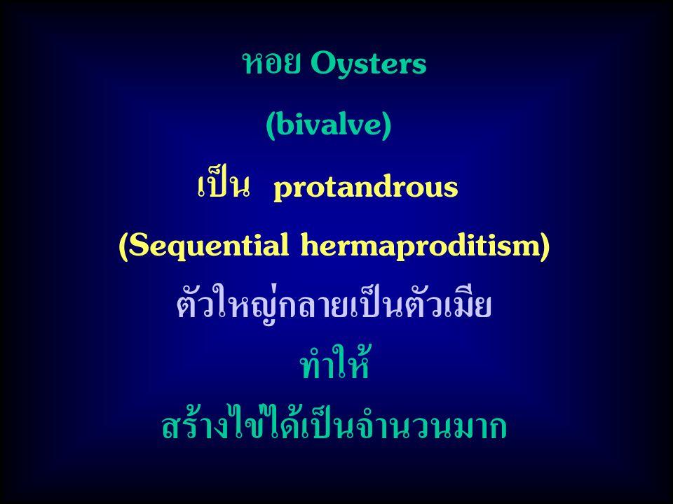 หอย Oysters (bivalve) เป็น protandrous (Sequential hermaproditism) ตัวใหญ่กลายเป็นตัวเมีย ทำให้ สร้างไข่ได้เป็นจำนวนมาก