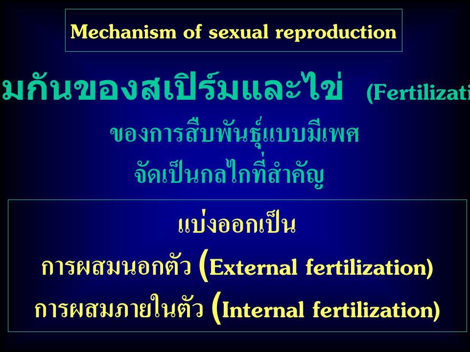 Mechanism of sexual reproduction แบ่งออกเป็น การผสมนอกตัว (External fertilization) การผสมภายในตัว (Internal fertilization) รวมกันของสเปิร์มและไข่ (Fertilization) ของการสืบพันธุ์แบบมีเพศ จัดเป็นกลไกที่สำคัญ