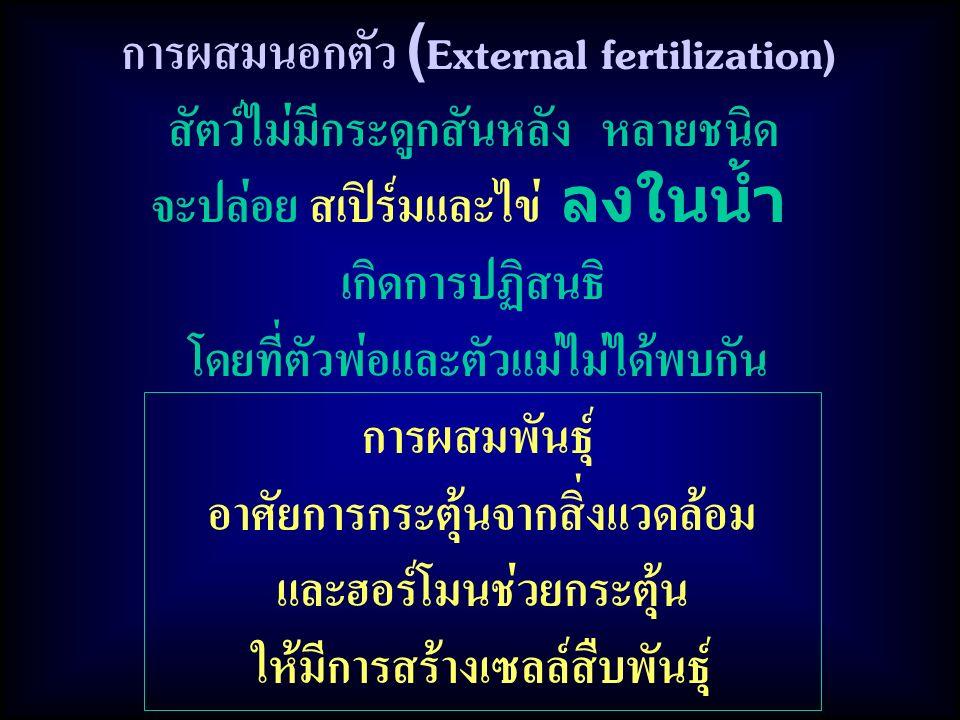 การผสมพันธุ์ อาศัยการกระตุ้นจากสิ่งแวดล้อม และฮอร์โมนช่วยกระตุ้น ให้มีการสร้างเซลล์สืบพันธุ์ การผสมนอกตัว (External fertilization) สัตว์ไม่มีกระดูกสันหลัง หลายชนิด จะปล่อย สเปิร์มและไข่ ลงในน้ำ เกิดการปฏิสนธิ โดยที่ตัวพ่อและตัวแม่ไม่ได้พบกัน
