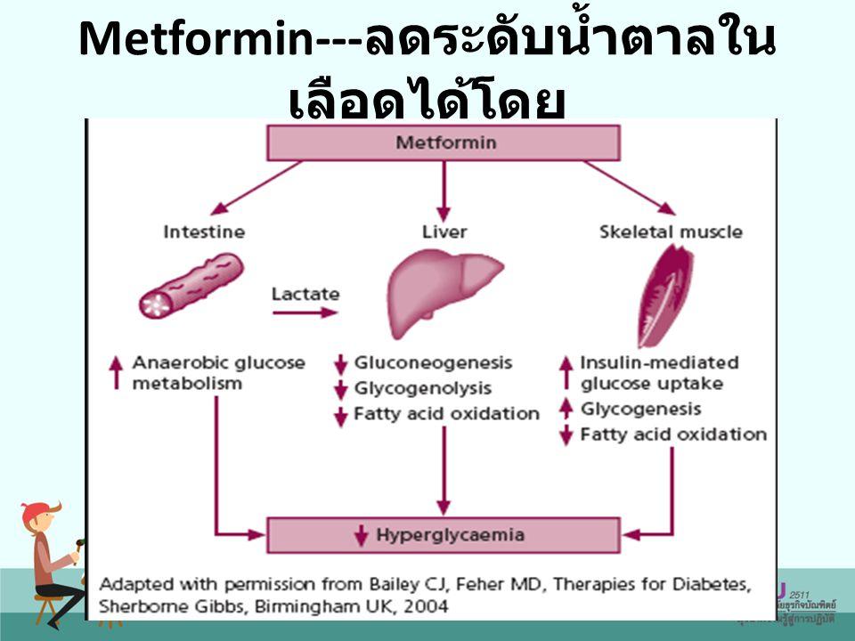 Metformin--- ลดระดับน้ำตาลใน เลือดได้โดย