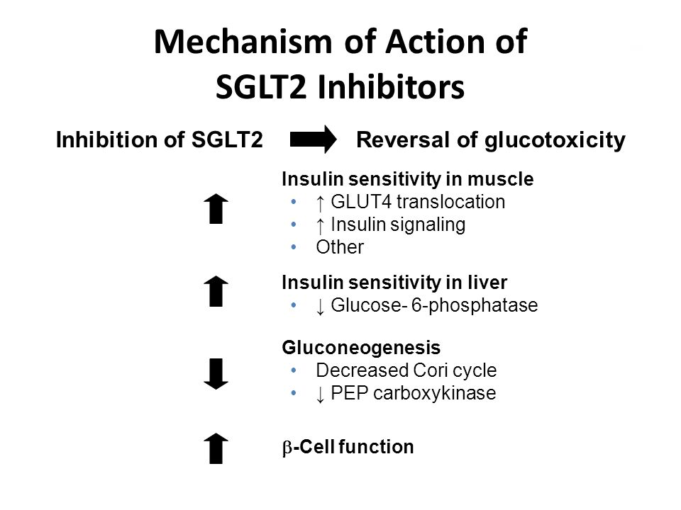 Mechanism of Action of SGLT2 Inhibitors Inhibition of SGLT2Reversal of glucotoxicity Insulin sensitivity in muscle ↑ GLUT4 translocation ↑ Insulin sig