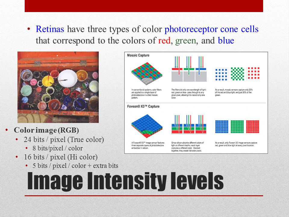 Image Intensity levels Retinas have three types of color photoreceptor cone cells that correspond to the colors of red, green, and blue Color image (RGB) 24 bits / pixel (True color) 8 bits/pixel / color 16 bits / pixel (Hi color) 5 bits / pixel / color + extra bits