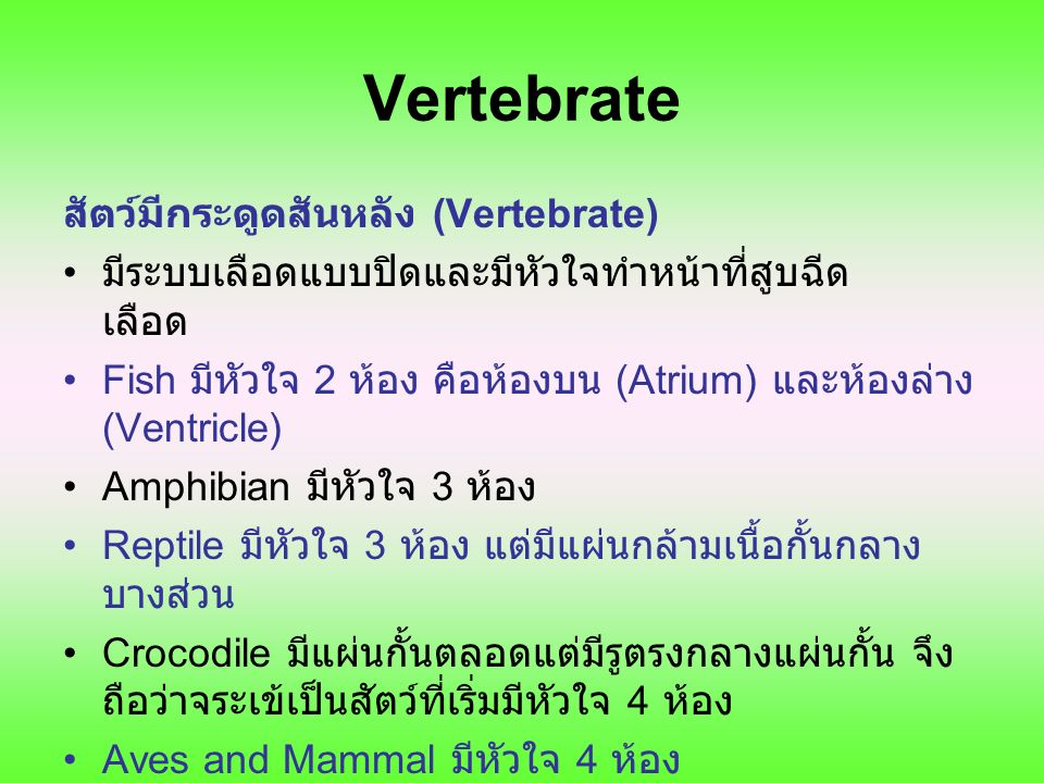 Vertebrate สัตว์มีกระดูดสันหลัง (Vertebrate) มีระบบเลือดแบบปิดและมีหัวใจทำหน้าที่สูบฉีด เลือด Fish มีหัวใจ 2 ห้อง คือห้องบน (Atrium) และห้องล่าง (Vent
