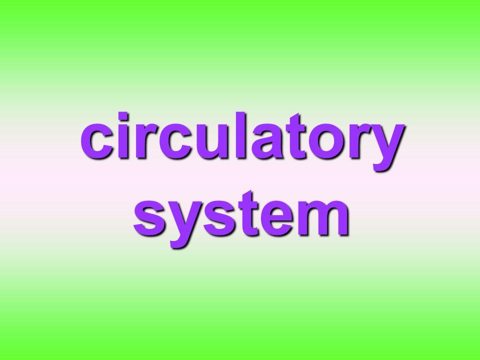 การลำเลียงสาร การลำเลียงสาร หมายถึง การนำเอาสารอาหาร ที่ย่อยแล้ว, O2 รวมทั้งสารที่เนื้อเยื่อหรืออวัยวะ บางอย่างสร้างขึ้น เช่น ฮอร์โมน ไปยังเซลล์ ต่างๆ ทั่วร่างกาย และ นำของเสียจากเซลล์ไปสู้โครงสร้างที่ทำหน้าที่ ขับถ่ายนำไปสู่ภายนอกร่างกาย