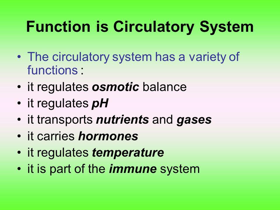 การลำเลียงสารในสัตว์ชั้นต่ำ Lower organisms (sponges, worms) have a simple cell-to-cell circulation.