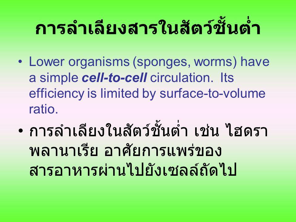 การลำเลียงสารในสัตว์ชั้นต่ำ Lower organisms (sponges, worms) have a simple cell-to-cell circulation. Its efficiency is limited by surface-to-volume ra