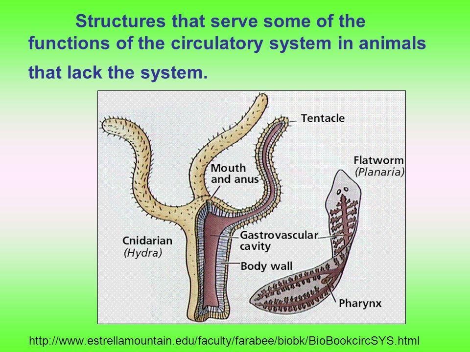 การลำเลียงสารในสัตว์ชั้นสูง การลำเลียงสารในสัตว์ชั้นสูงขึ้นมาจะเริ่มมีระบบ หมุนเวียนเลือดซึ่งสามารถแบ่งออกได้เป็น 2 แบบ คือ 1.