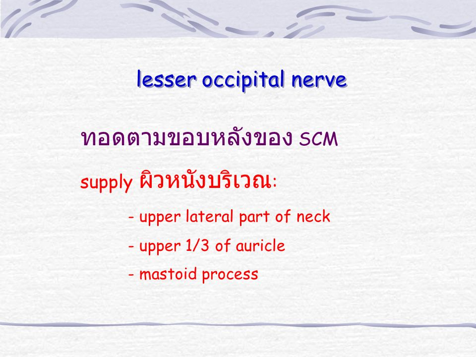 ทอดตามขอบหลังของ SCM supply ผิวหนังบริเวณ : - upper lateral part of neck - upper 1/3 of auricle - mastoid process lesser occipital nerve