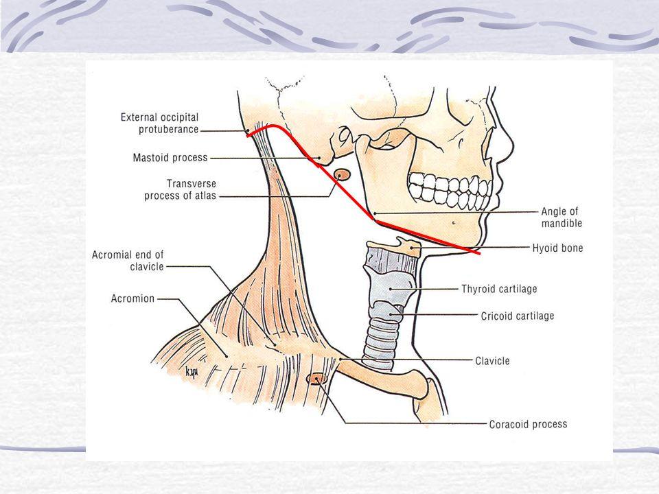 Boundary Lower surface:- - ขอบบนของ sternum - clavicle - acromion - เส้นที่ลากต่อจาก acromion ไปยัง C.V.