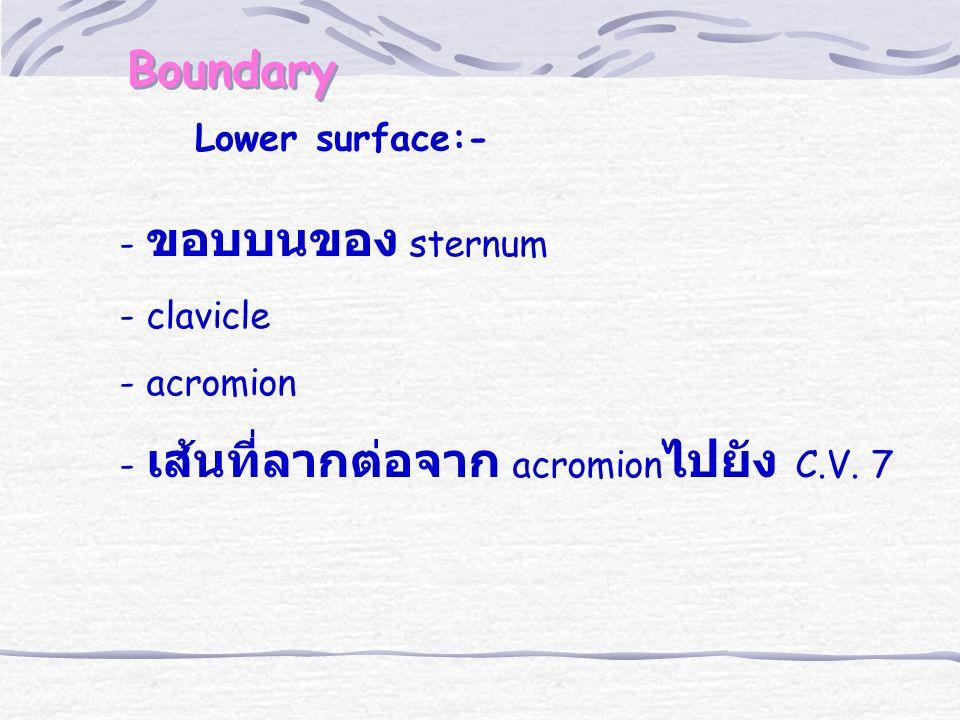 Boundary Lower surface:- - ขอบบนของ sternum - clavicle - acromion - เส้นที่ลากต่อจาก acromion ไปยัง C.V. 7