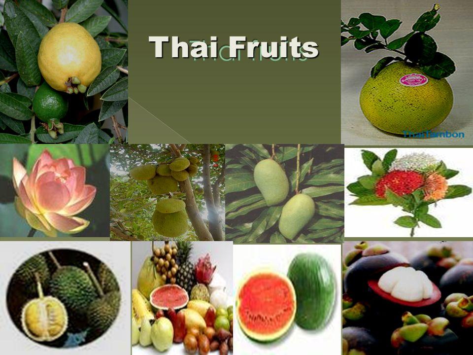 Custard Apple (Noina)  Durian (Turian)  Guava (Farang)  Pomelo( Som-O)  Jakfruit (Khanun)  Longan (Lamyai)  Mango (Mamuang)  Mangosteen(Mang Khut)  Pineapple( Sapparote)  Watermelon( Taeng Mo  Rambutan(Ngoa)