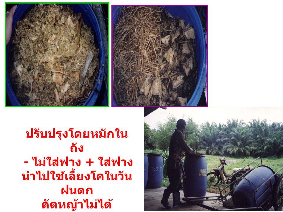 ปรับปรุงโดยหมักใน ถัง - ไม่ใส่ฟาง + ใส่ฟาง นำไปใช้เลี้ยงโคในวัน ฝนตก ตัดหญ้าไม่ได้