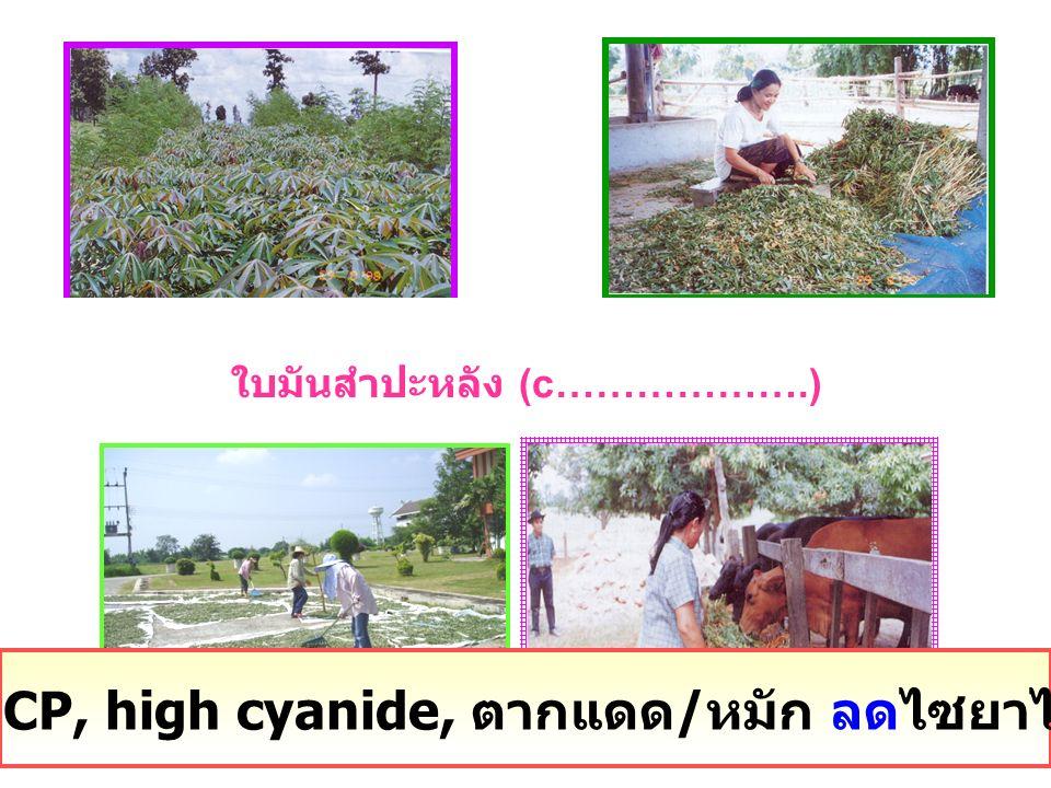25% CP, high cyanide, ตากแดด / หมัก ลดไซยาไนด์ได้ ใบมันสำปะหลัง (c……………….)