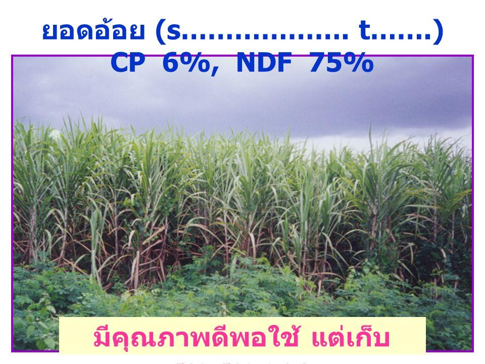 ยอดอ้อย (s………………. t…….) CP 6%, NDF 75% มีคุณภาพดีพอใช้ แต่เก็บ รวบรวมยาก