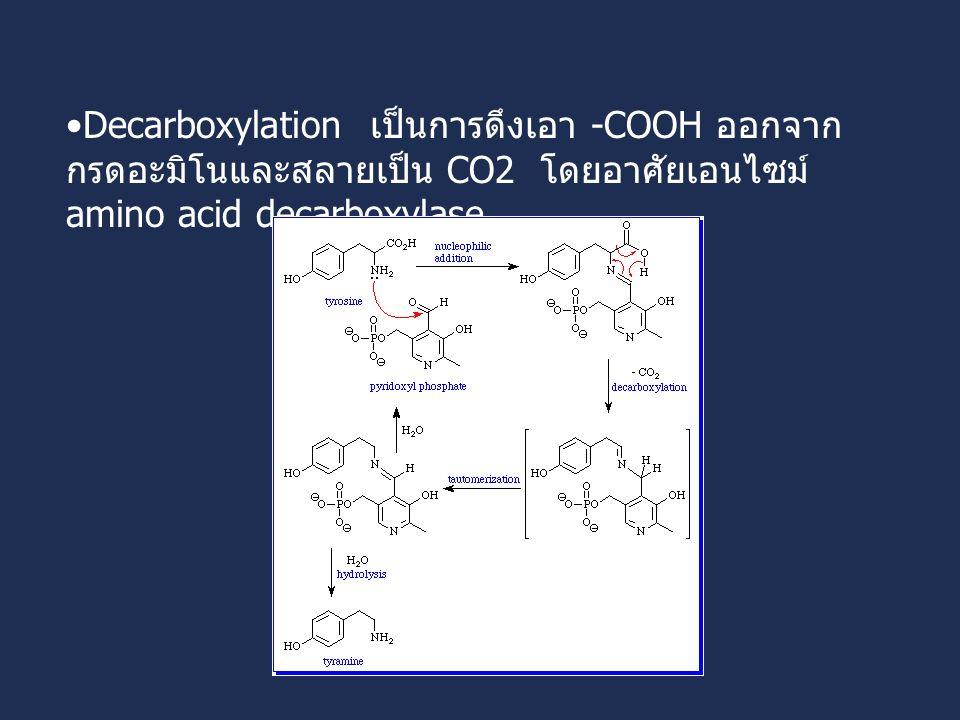 Decarboxylation เป็นการดึงเอา -COOH ออกจาก กรดอะมิโนและสลายเป็น CO2 โดยอาศัยเอนไซม์ amino acid decarboxylase