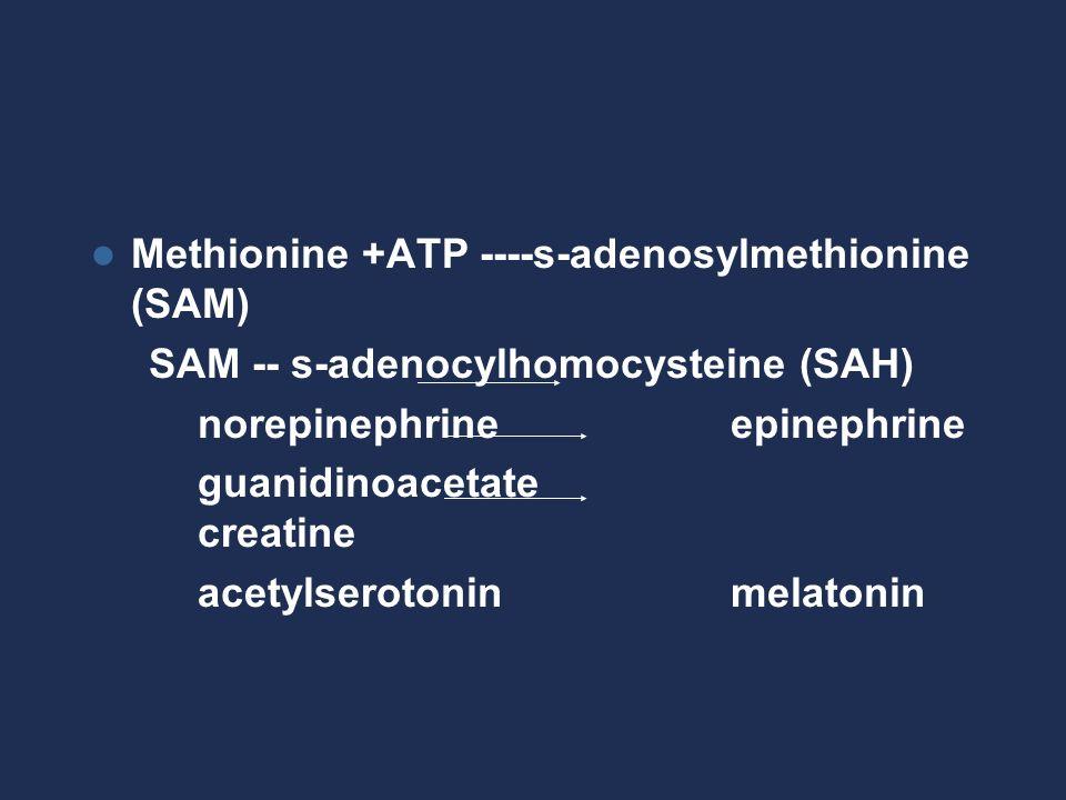 Methionine +ATP ----s-adenosylmethionine (SAM) SAM -- s-adenocylhomocysteine (SAH) norepinephrineepinephrine guanidinoacetate creatine acetylserotoninmelatonin