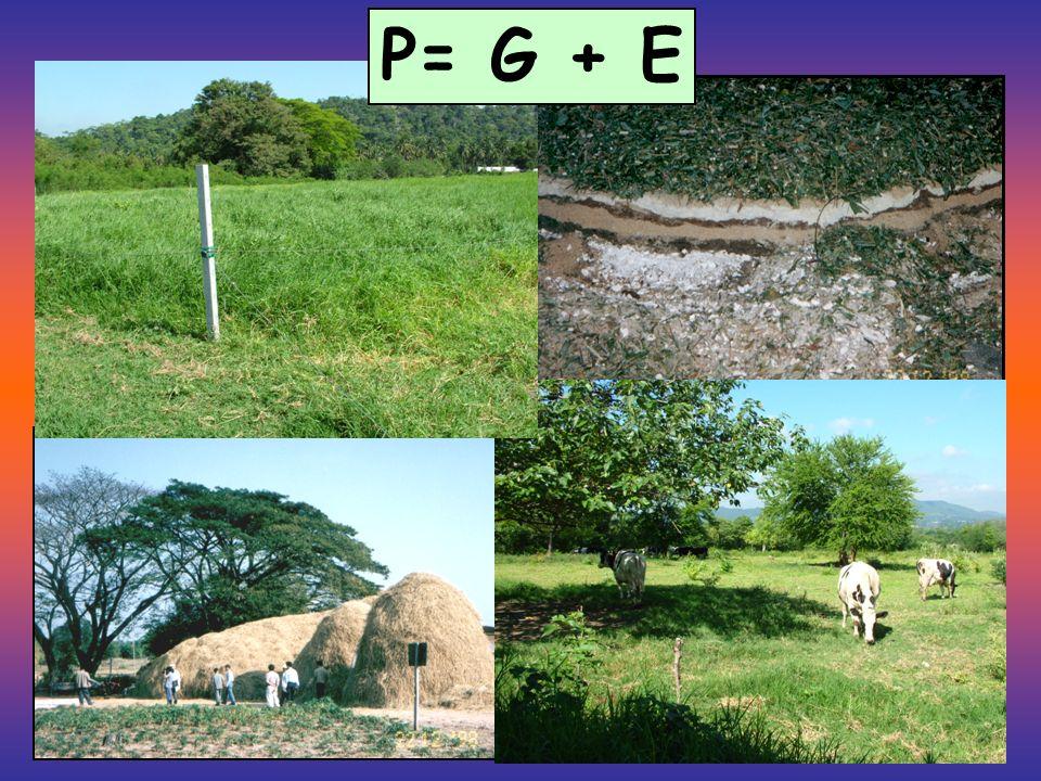 P= G + E