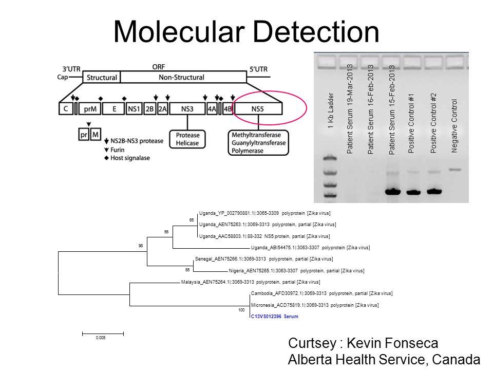 Molecular Detection Uganda_YP_002790881.1|:3065-3309 polyprotein [Zika virus] Uganda_AEN75263.1|:3069-3313 polyprotein, partial [Zika virus] Uganda_AA