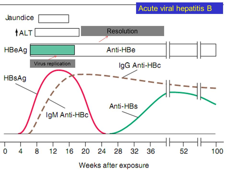 Active viral replication Acute viral hepatitis B Resolution Virus replication